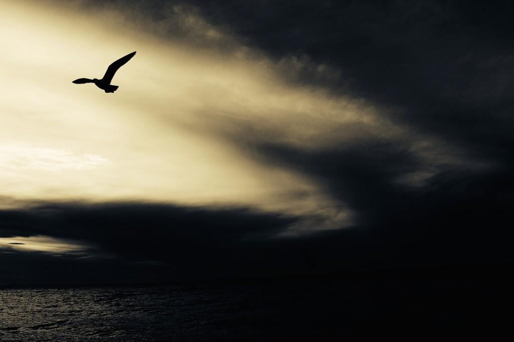 seagull-768785_1920